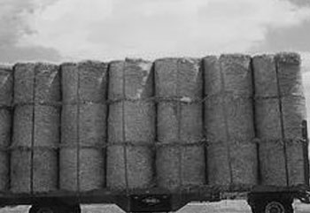 Deves-Agricoles_grayscale